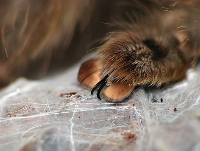 können spinnen hören