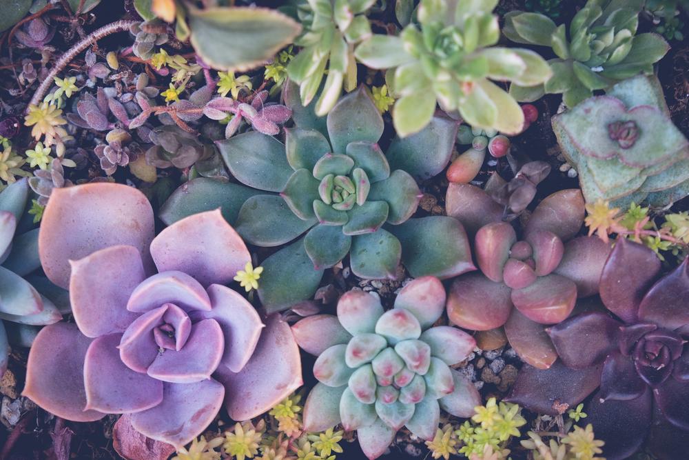 Kaktus-Kuchen: So schön ist der neueste Back-Trend