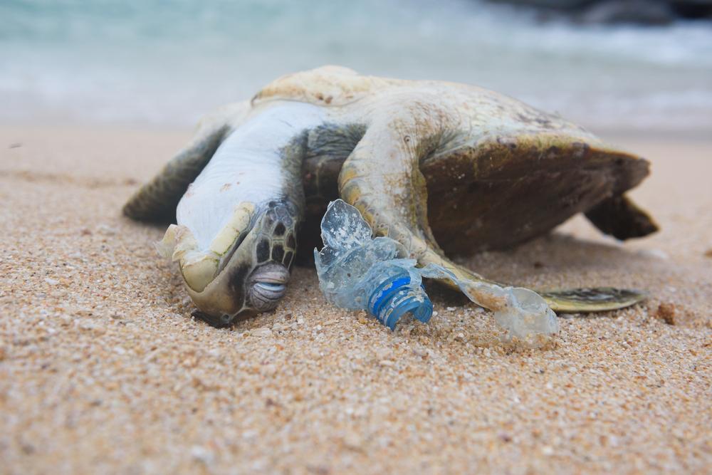 """Tag der Meere"": Rekordmengen Plastikmüll im Mittelmeer gemessen"
