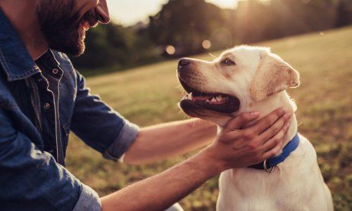 Was dein Haustier über deine Persönlichkeit aussagt