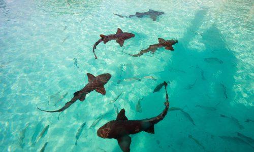 Bloggerin posiert auf den Bahamas und wird von Hai gebissen