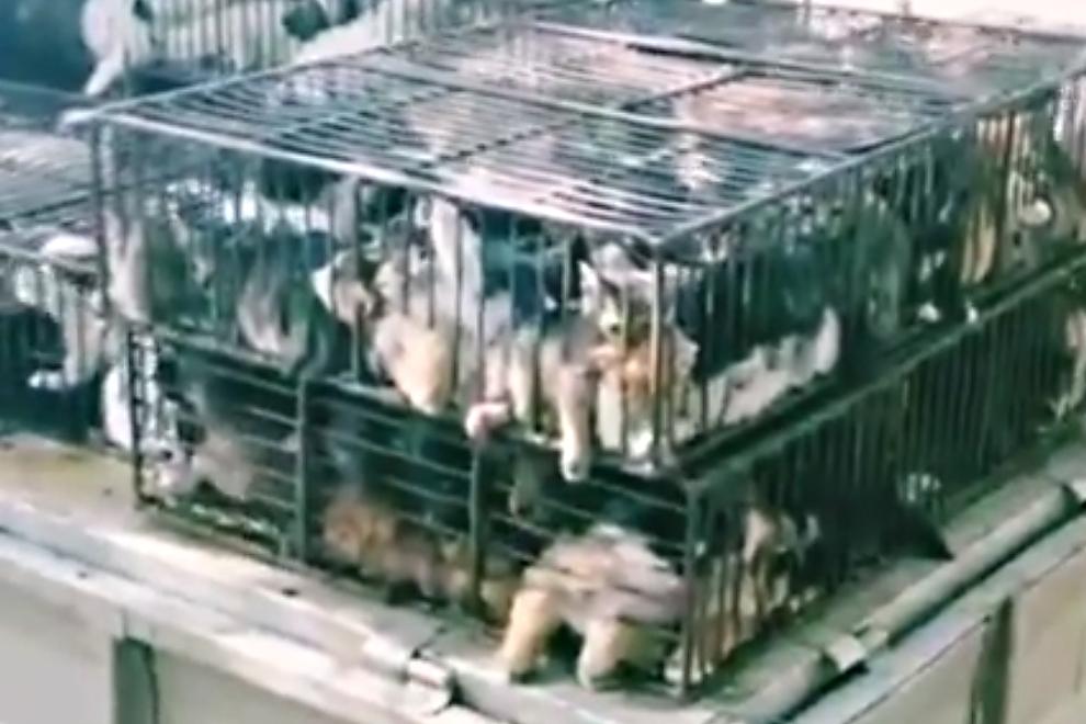 China: Entsetzliches Video zeigt Katzen- und Hunde-Babys auf Tiermarkt
