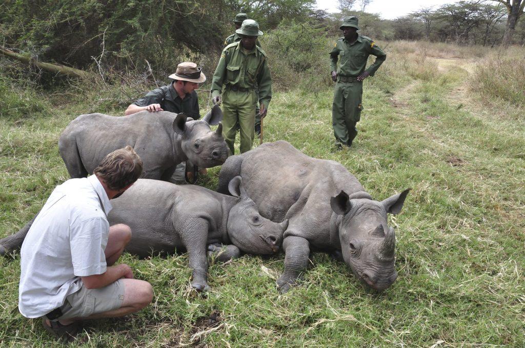 Frauen kämpfen gegen Nashorn-Wilderer in Afrika