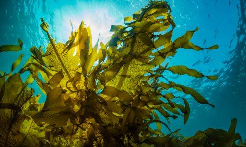 Wundermittel Algen: Was du darüber wissen musst