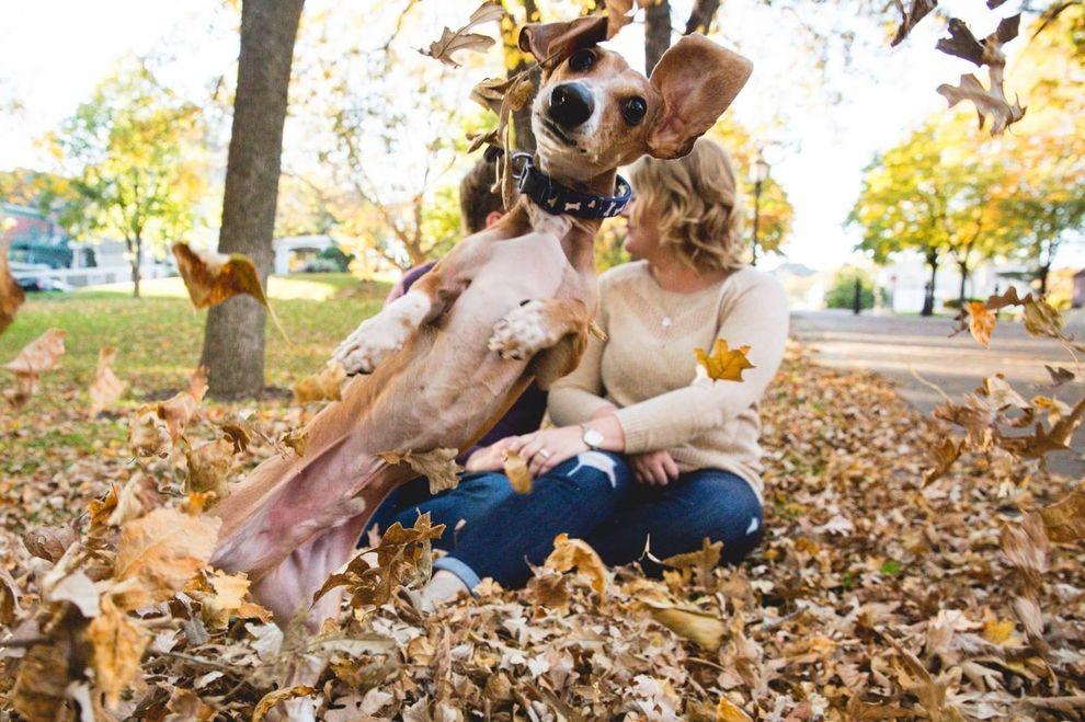 Hund tobt sich auf Verlobungsfoto aus