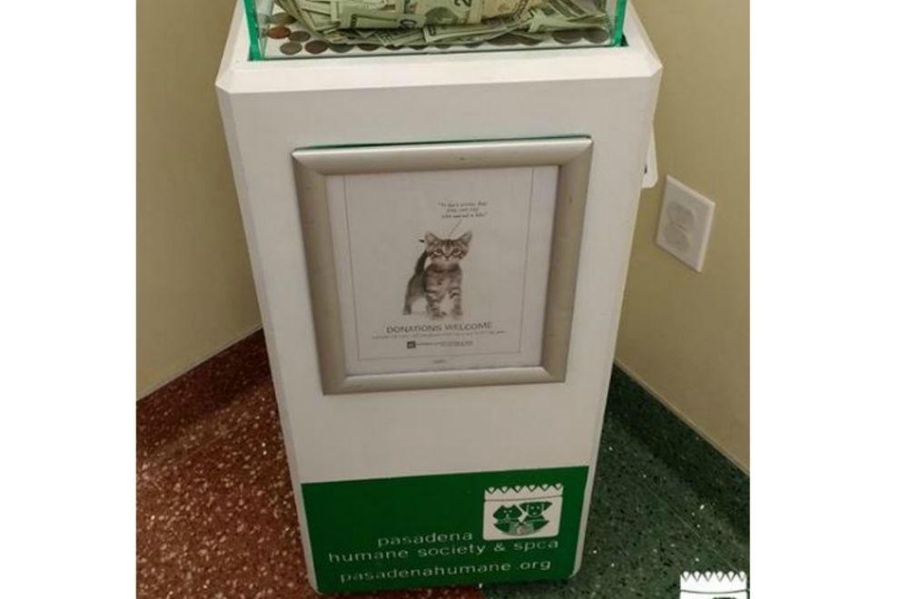 Tierheim macht unglaublichen Fund in Spendenbox