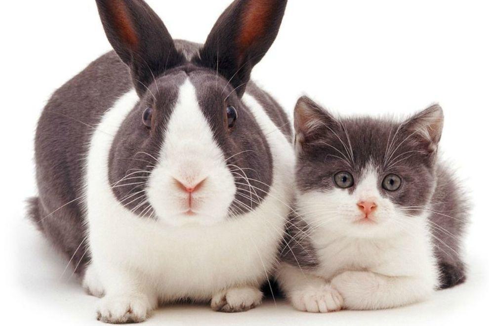 Diese Tiere sehen aus wie Zwillinge