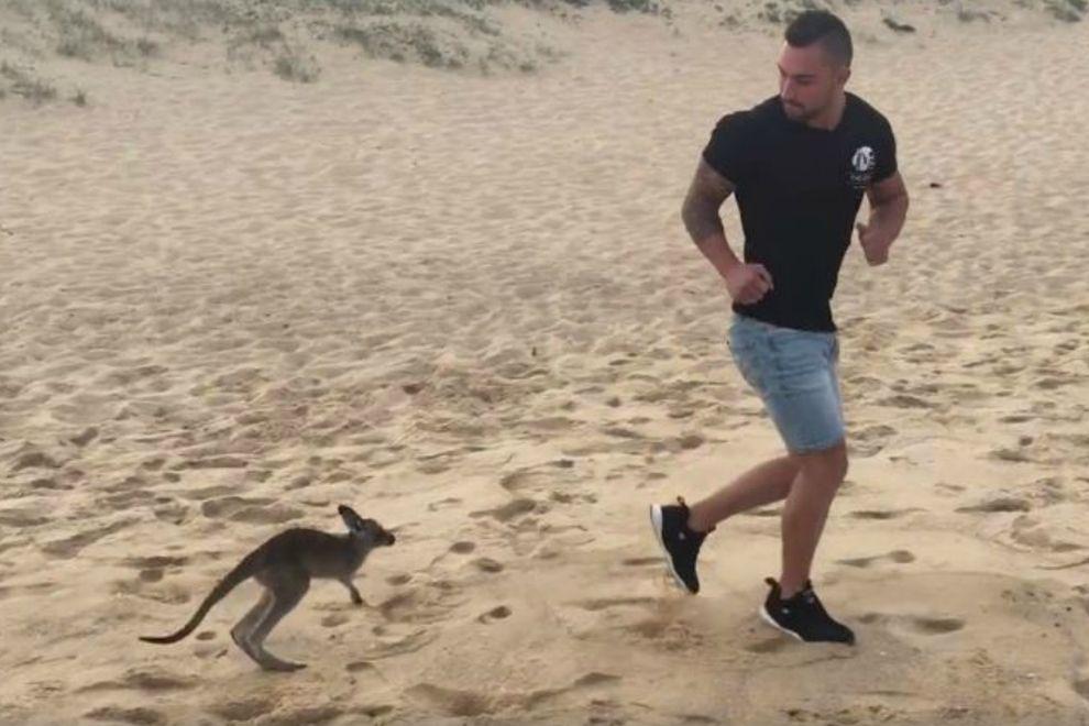 Dieser Typ wird von einem Känguru verfolgt und es ist so süß