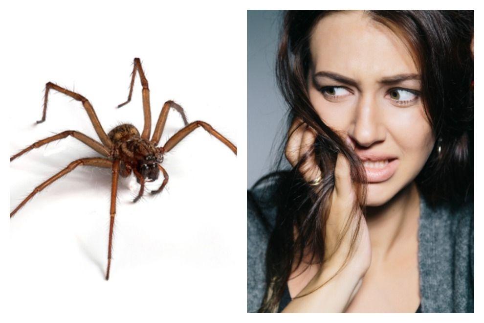Igitt: Das passiert mit einer Spinne, wenn du sie einsaugst