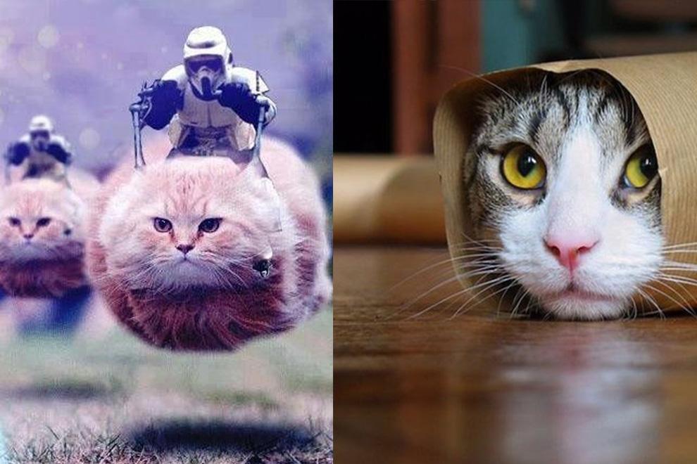 Bevölkerung postet Katzen-Bilder zur Unterstützung