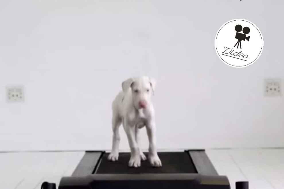 Mann filmte sein Haustier jeden Tag