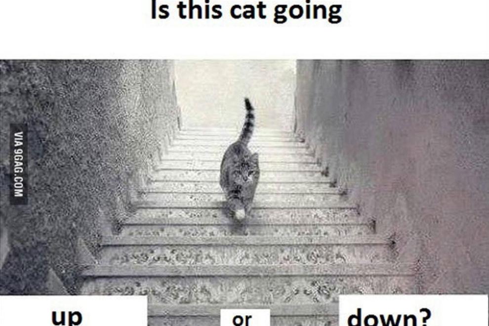 Läuft die Katze rauf oder runter?
