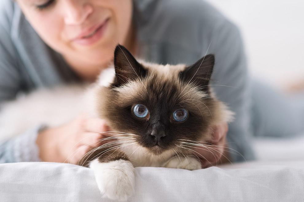 Die 11 schrägsten Dinge, die man über Katzen wissen muss