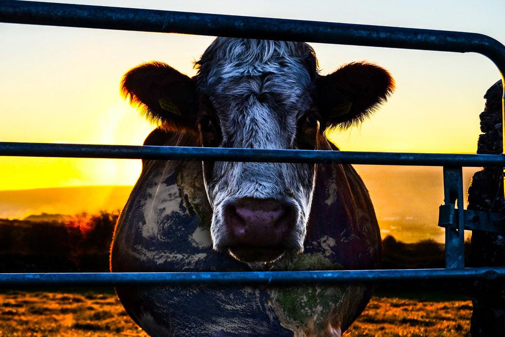 So zerstört der Fleischkonsum unseren Planeten