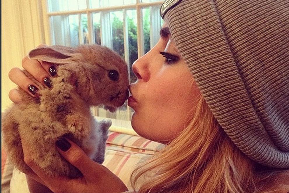 Cara Delevingnes Kaninchen Cecil bekommt eine Nanny