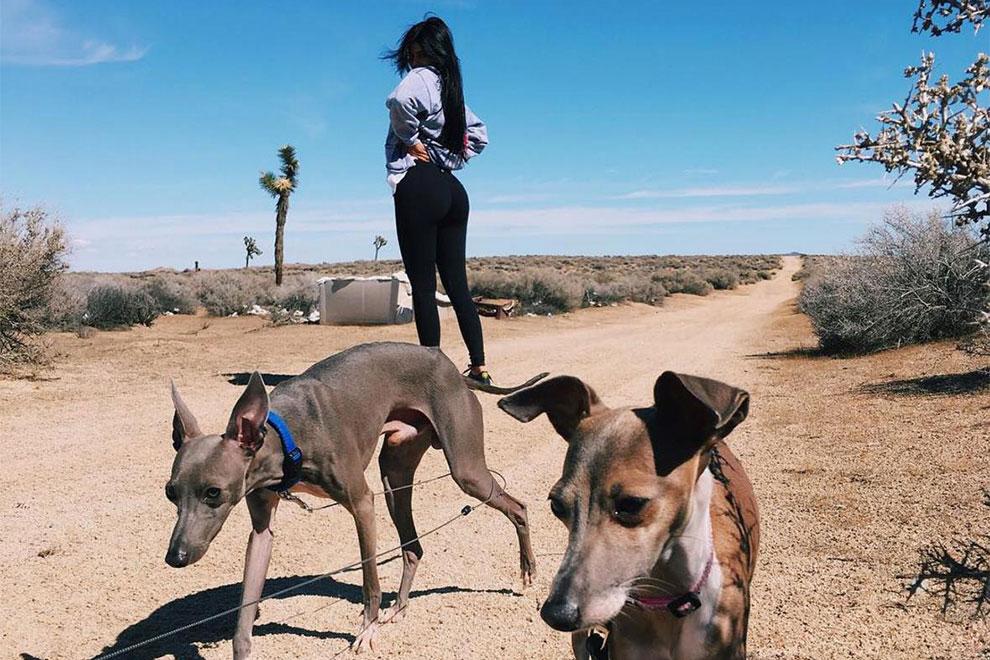 Kylie Jenner vom Vorwurf der Tierquälerei entlastet
