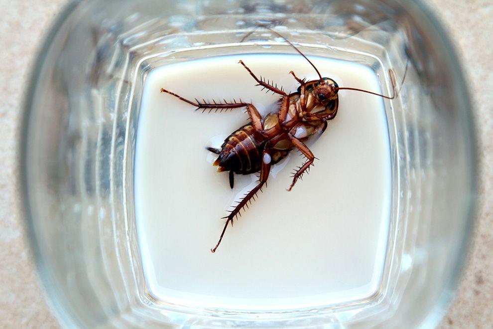 """""""Juckreiz hinter den Augen"""": Lebende Kakerlake in Kopf von Frau gefunden"""