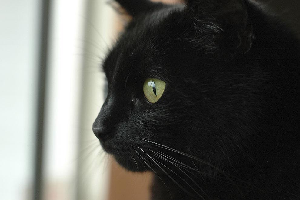 Fotos von schwarzen Katzen für Instagram und Facebook ungeeignet