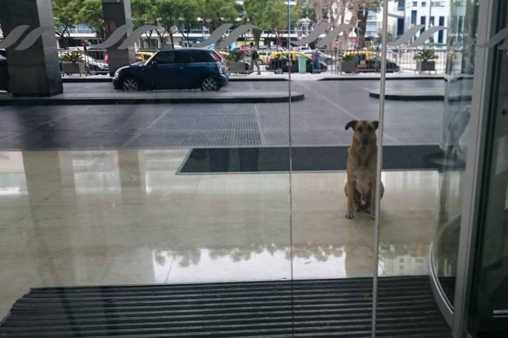Stewardess adoptiert Hund, der monatelang auf sie wartet