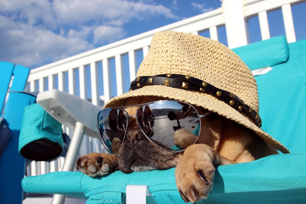So schützt du deine Haustiere vor der Hitze
