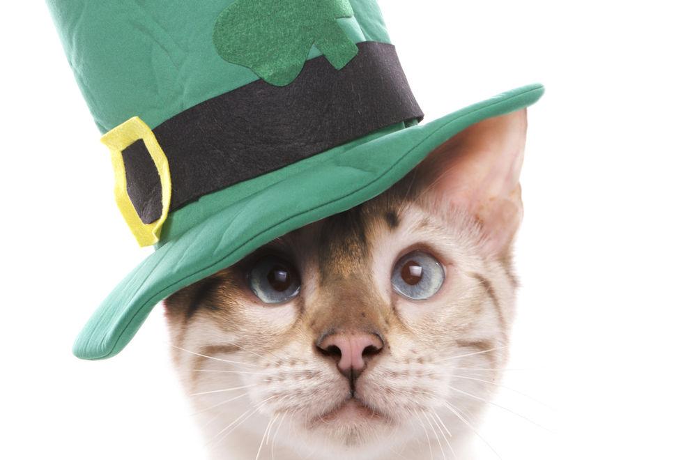7 Fakten zum St. Patrick's Day