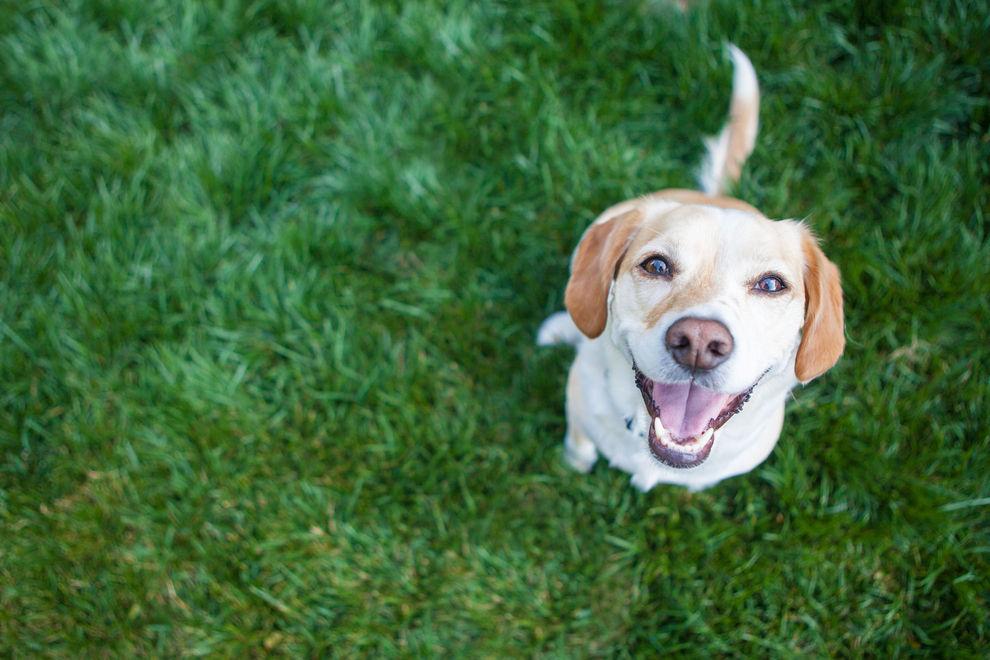 Erneut Giftköder-Attacken gegen Hunde