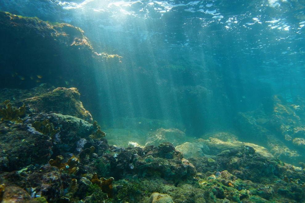 "Forscher entdecken mysteriösen ""Geisterfisch"" im Ozean"