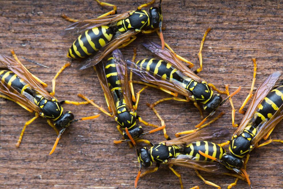 So hältst du Gelsen und Wespen im Sommer auf Abstand