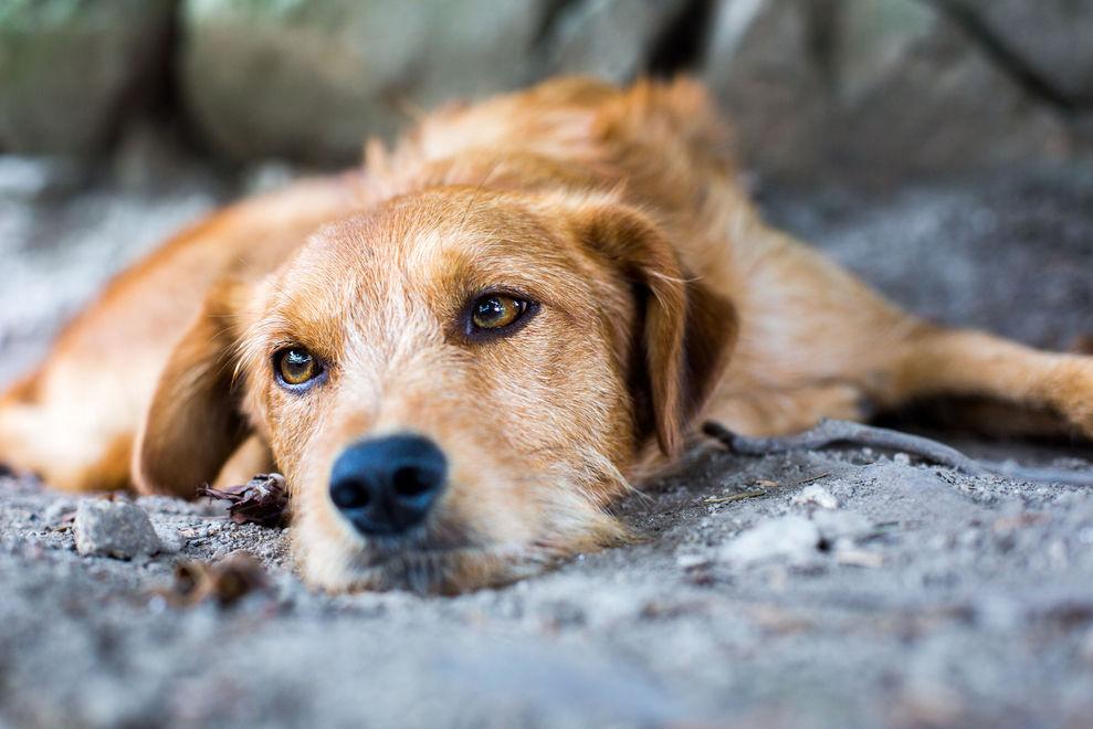 Diese Aktion für streunende Hunde berührt weltweit