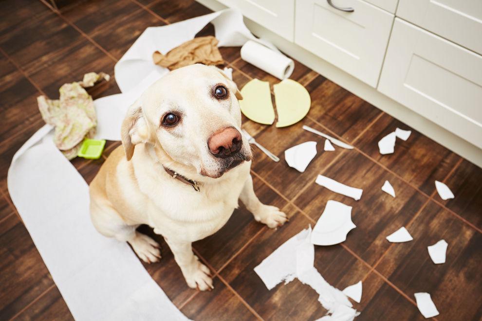 So lernt dein Hund das Alleinsein