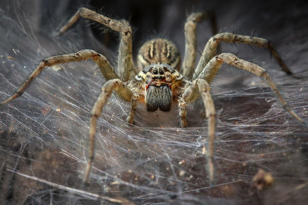 In diesem Raum deiner Wohnung leben die meisten Spinnen