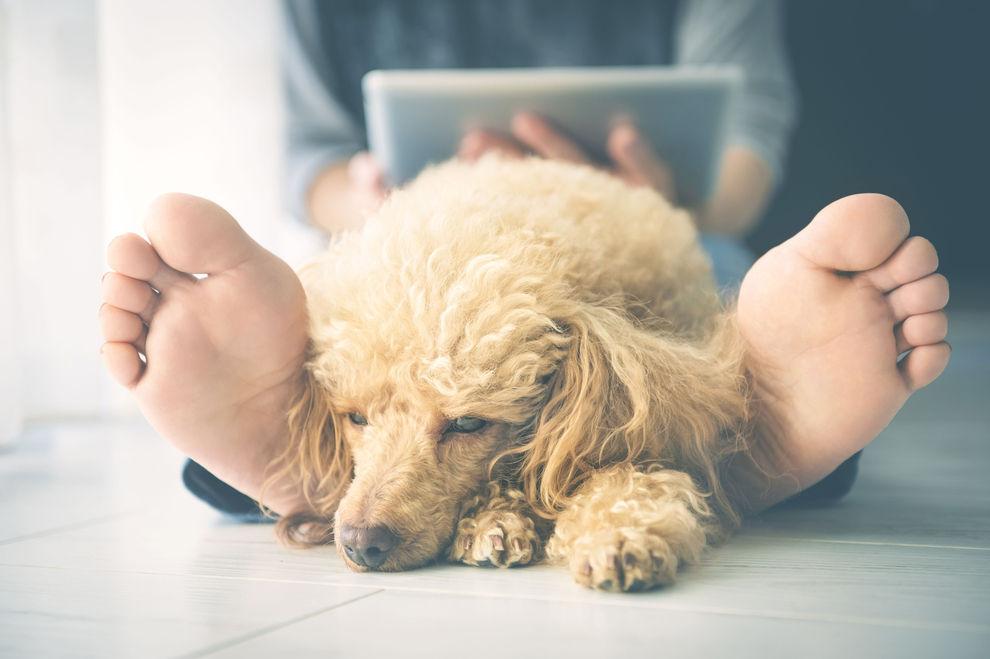 Hunde bei Gewitter beruhigen: 5 Tipps, die helfen können