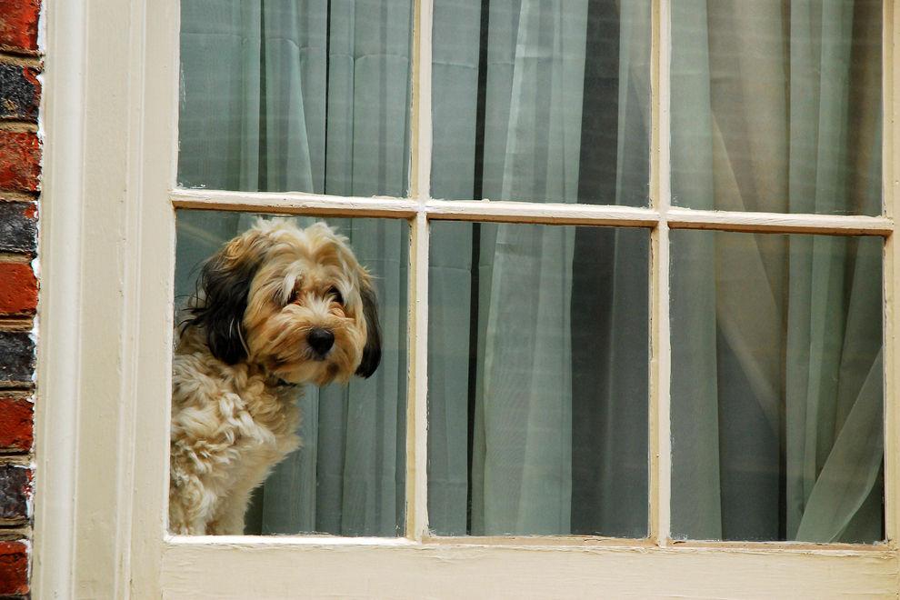 Deswegen starrte dieser Hund tagelang aus dem Fenster