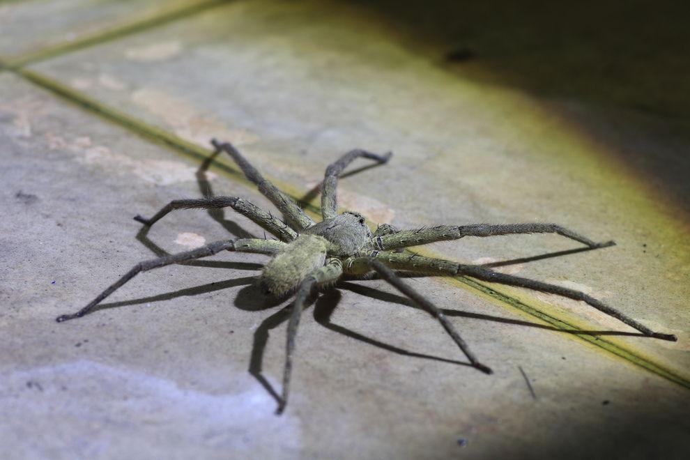 Diese Bilder können dich von deiner Spinnen-Phobie heilen