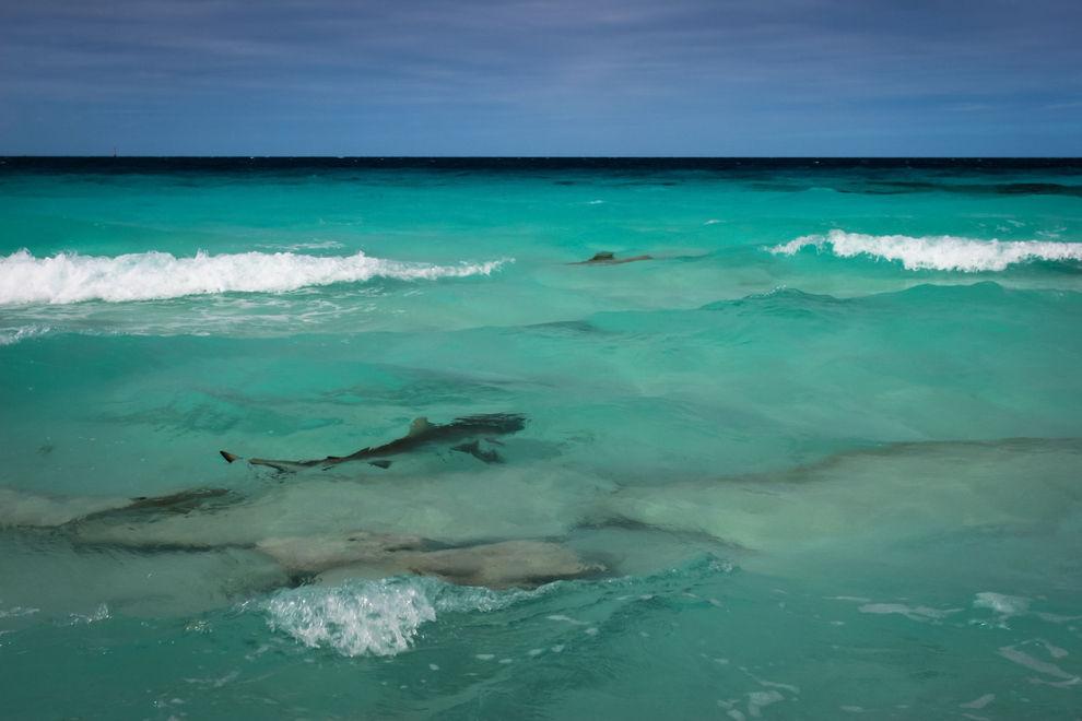 Hai auf Strand in Mallorca eingeschläfert