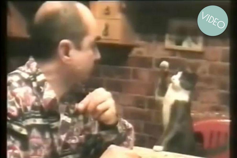 Diese Katze kann Zeichensprache!