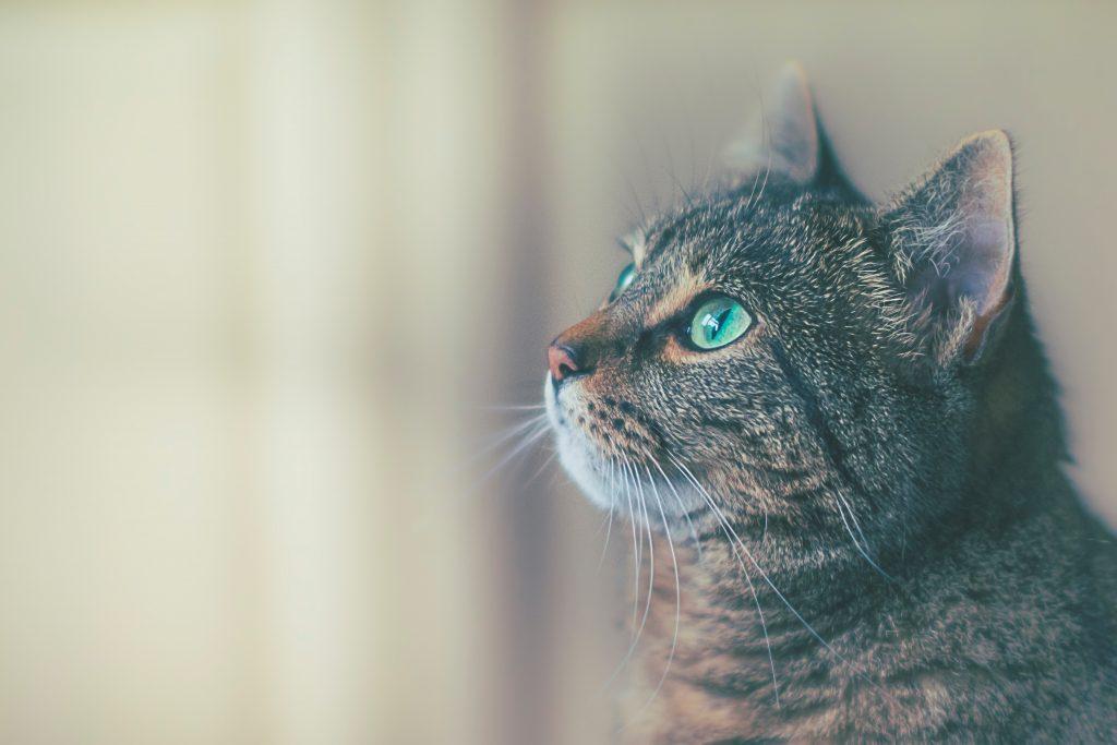 Head Pressing: Wenn du deine Katze oder deinen Hund so siehst, dann ist es ein Notfall
