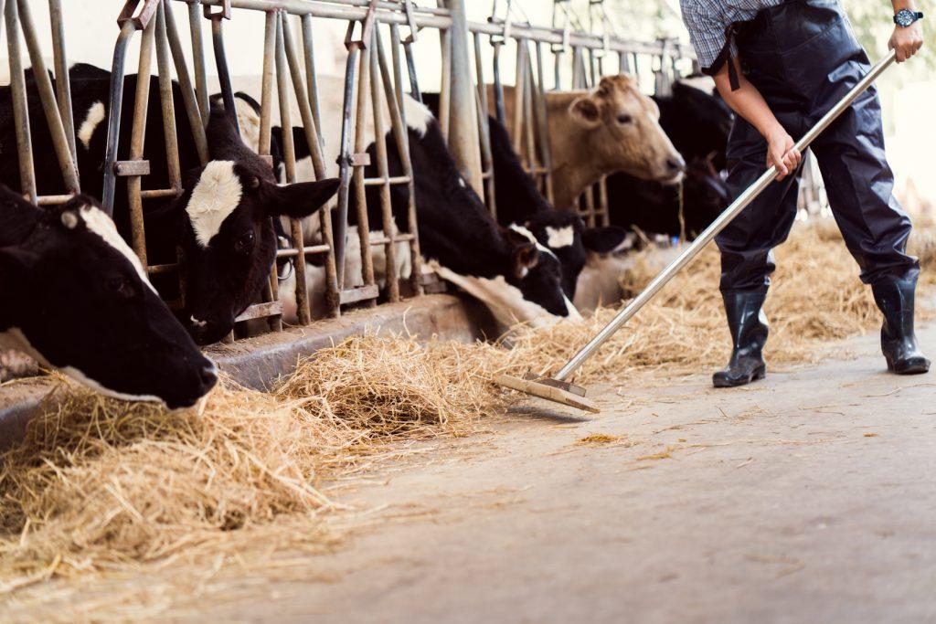 Zu oft werden Antibiotika in der Tierhaltung zur Krankheitsverhütung statt -behandlung eingesetzt. Das senkt deren Effizienz langfristig sehr stark.
