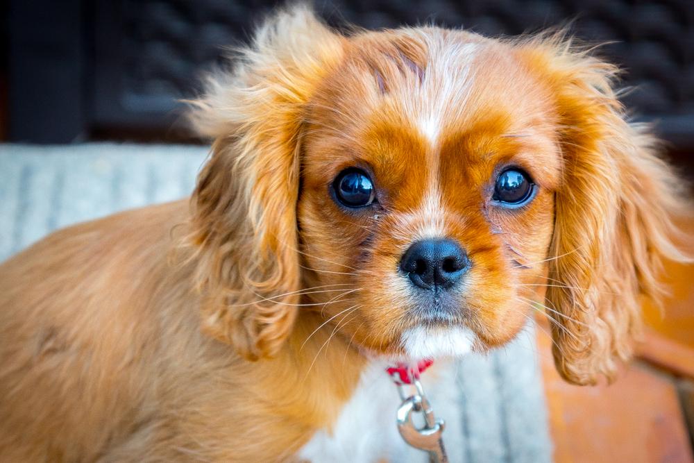 Drogenschmuggel: Tierarzt pflanzte Hundewelpen Heroin ein