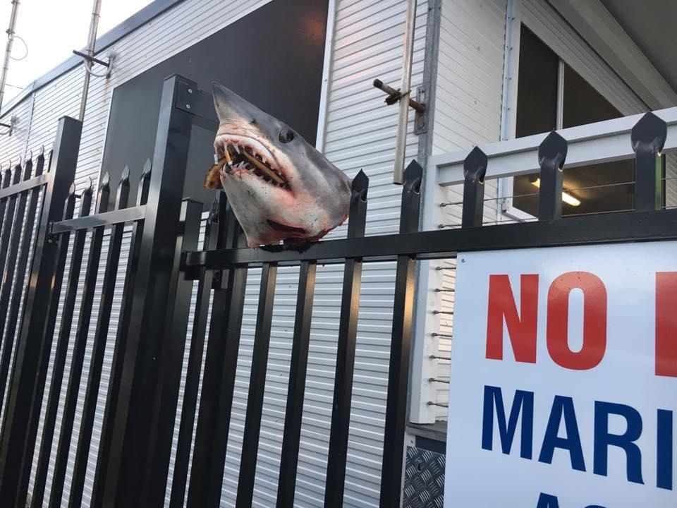 Unbekannte Täter spießen Haikopf auf Zaun auf