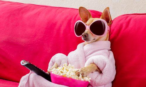 Warum du gemeinsam mit deinem Haustier Netflix schauen solltest
