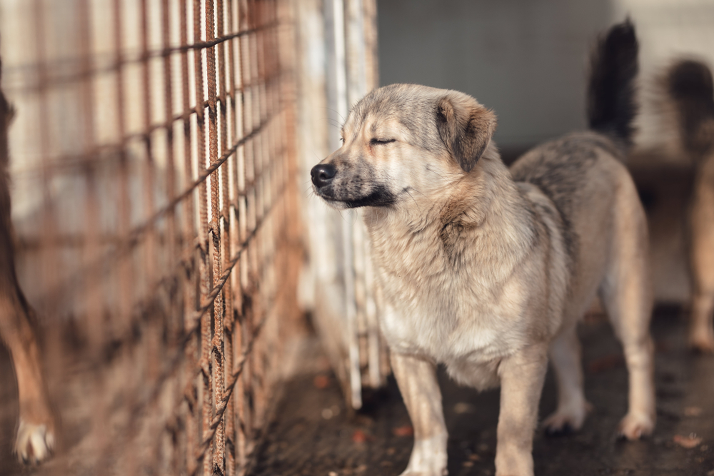 "Hundefleischfestival in Yulin hat begonnen: Hundekadaver für 100 Euro als ""Delikatesse"""