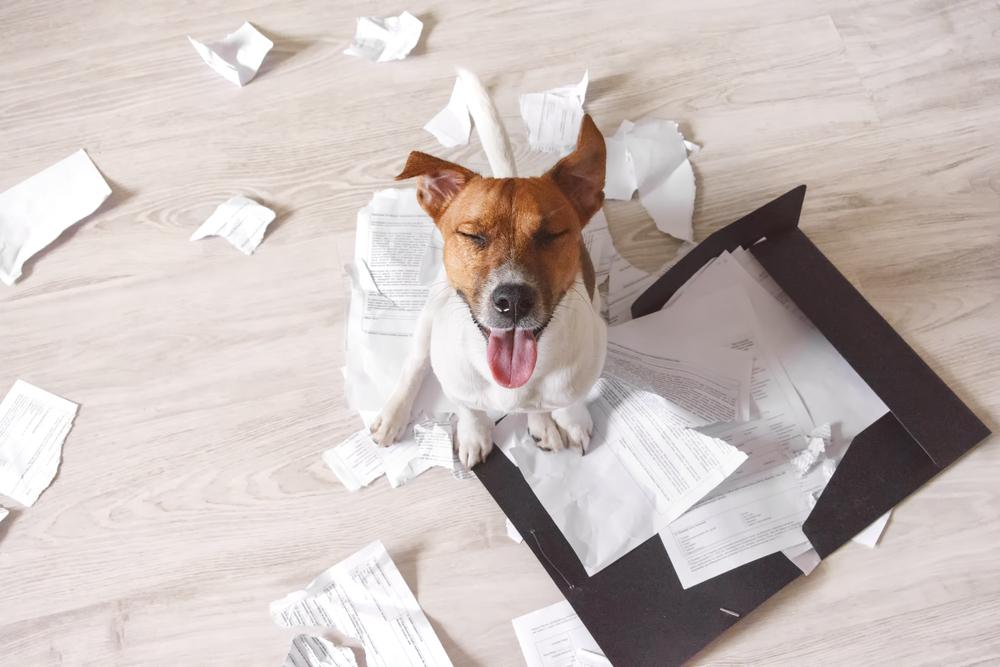 Hund frisst Reisepässe: Urlaub fällt aus