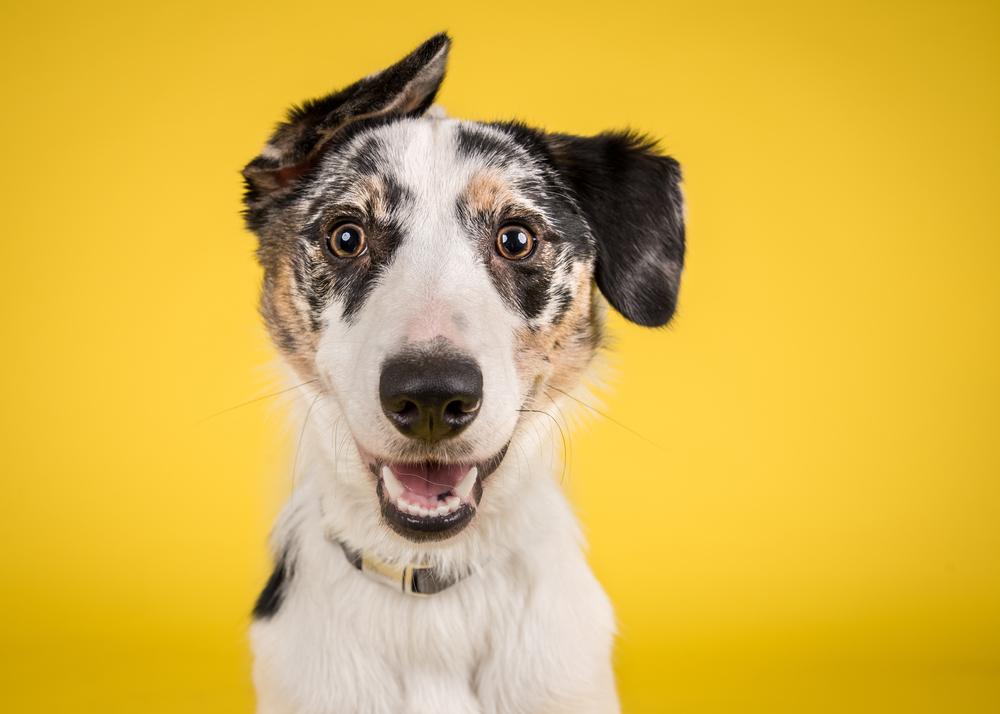 """""""Maxdonna"""": Hund stellt Madonna-Fotos nach"""