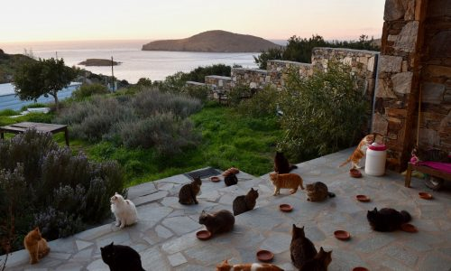 Job-Angebot: Wer will auf einer griechischen Insel Katzen sitten?