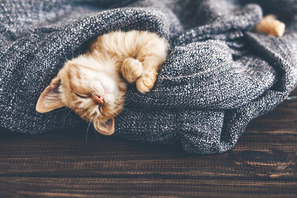 Katze schleicht sich bei Modenschau auf Catwalk und wird zum Star im Netz
