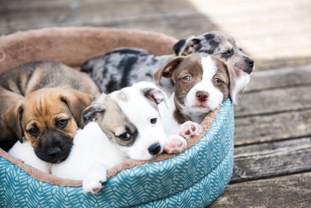 An dieser Uni gibt es für Studierende einen Raum voller Hundewelpen