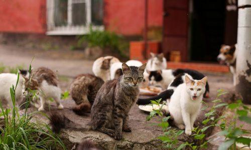 Mann hat 18 Katzen in seinem Keller gehalten