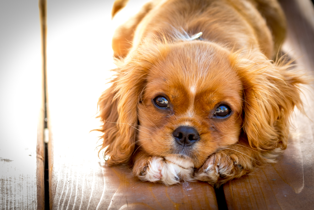 So gezielt könntest du von deinem Hund manipuliert werden