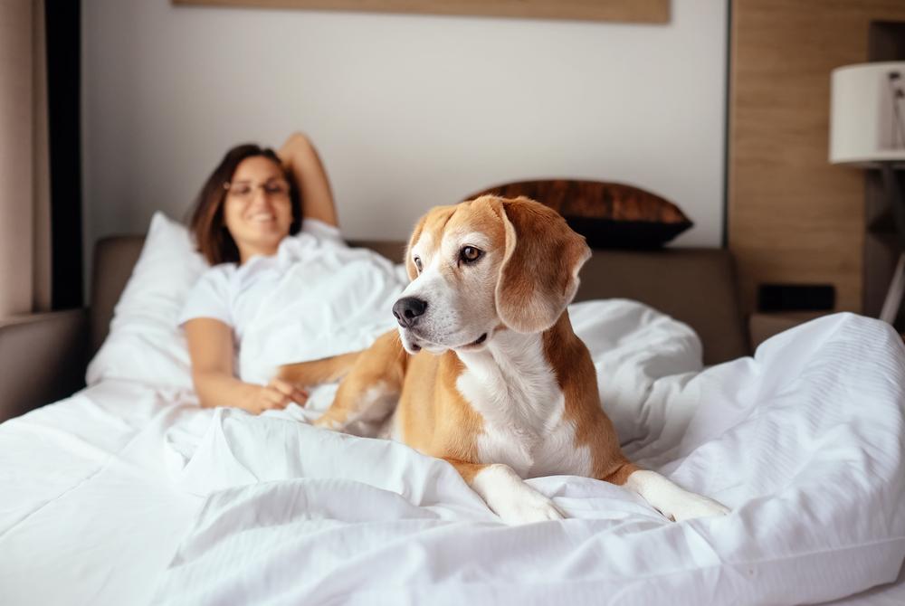 Studie: Hunde sind der perfekte Einschlafpartner für Frauen